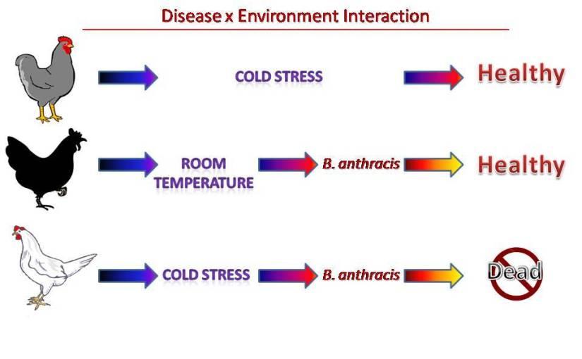 Biopsykososial modell