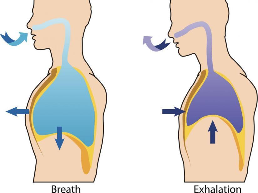 Respirasjon