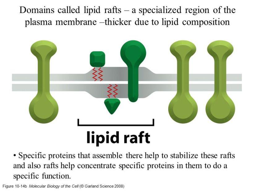 Cellens avgrensning, ekstracellulærtmiljø