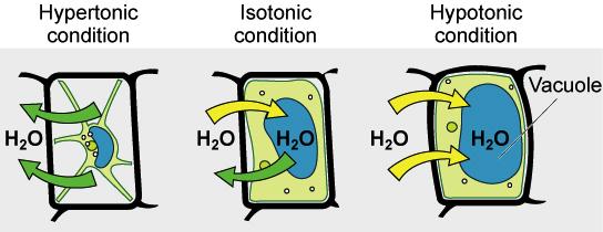 Diffusjon over membraner